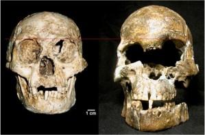 skulls-620x408