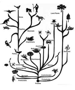 science-biology-evolution-infographics-1214x1458-wallpaper_www.wall321.com_71